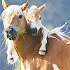 Two horse slide puzzle