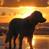 Dog in sunrise Puzzle